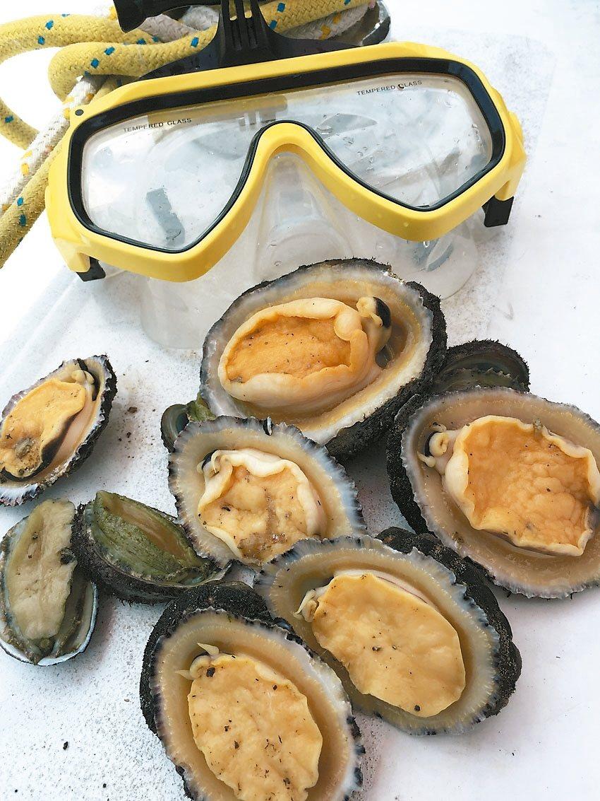 放雞島海底生態豐富,即使初次潛水,也能收穫豐富。 圖/讀者提供