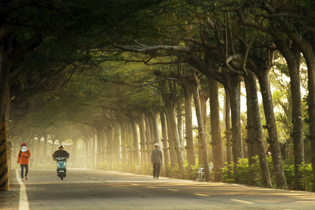 屏東潮州泗林綠色隧道早晨斜射光季節限定美景,每年一月與七月清晨日出才有的金黃斜射...