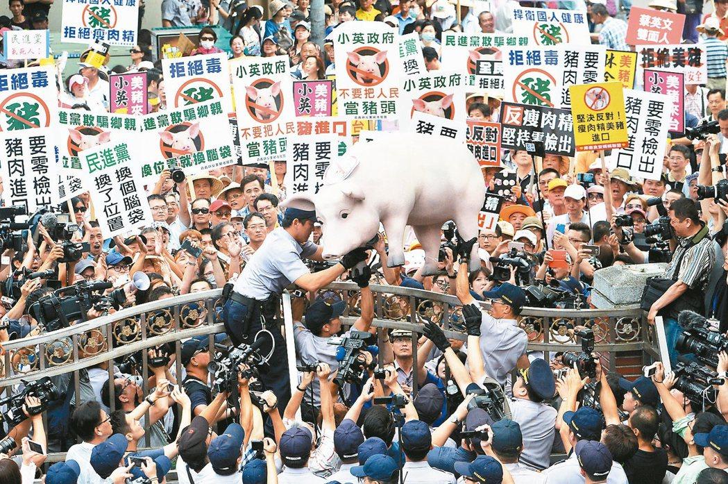 豬農去年為抗議政府有意開放含萊克多巴胺美豬進口,集結在立法院外抗議。 圖/報系資...