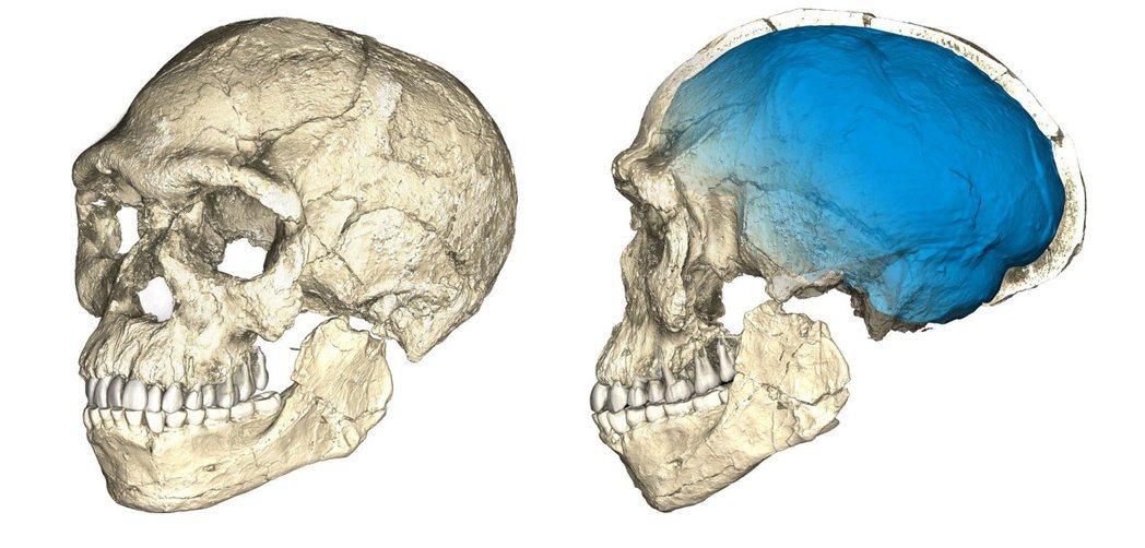 科學家以電腦重建的智人頭骨樣貌。(路透)
