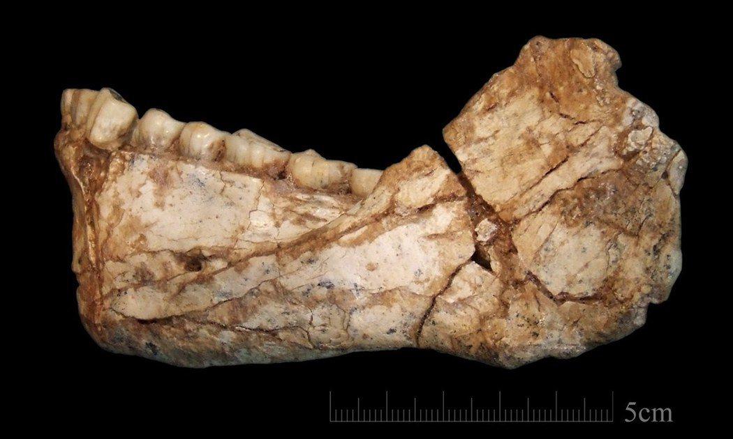 德國研究團隊發現的智人化石,可能使人類起源推前10萬年。(歐新社)