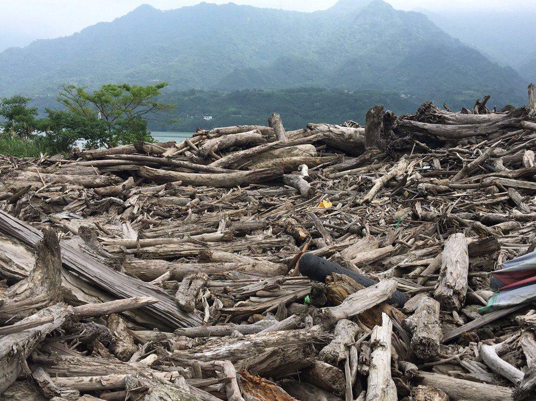 漂流木一年只有1次開放撿拾,機會難得。記者鄭國樑/攝影
