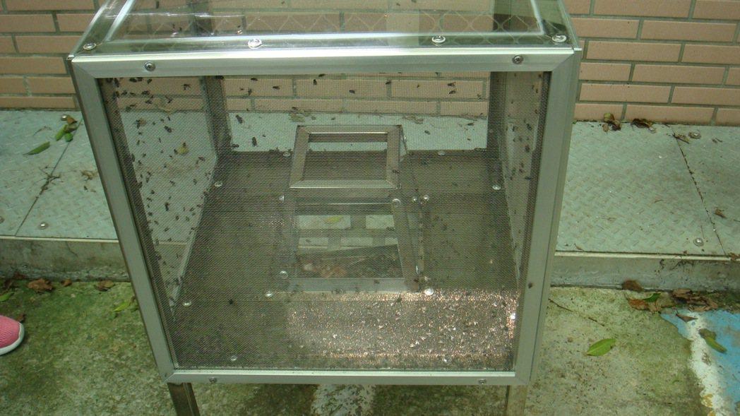 南投縣環保局在八卦山區名崗國小放置捕蠅器,一天就捕捉數百隻蒼蠅,效果好又衛生。圖...