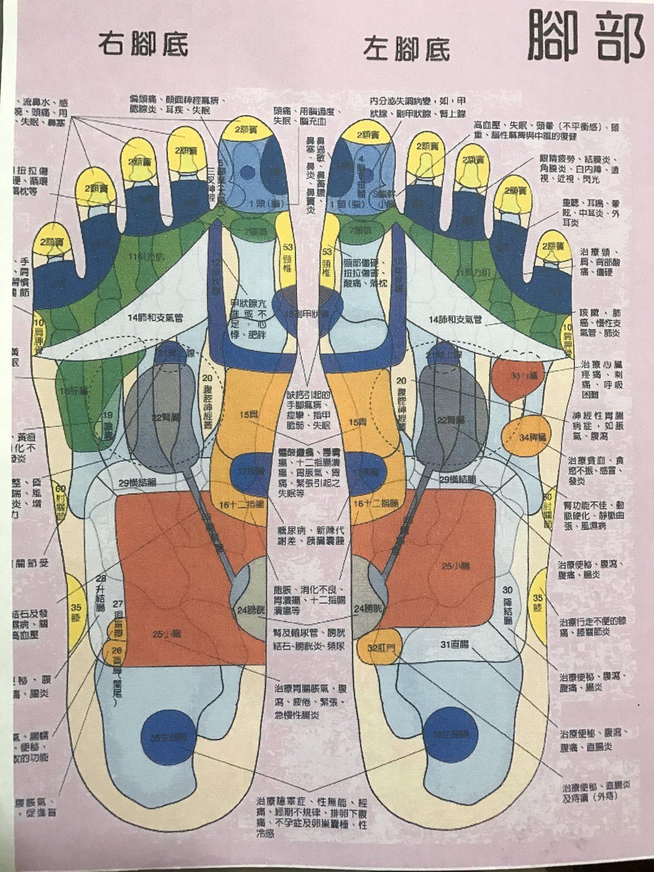 腳底按摩對應的人體器官。記者吳淑君/翻攝