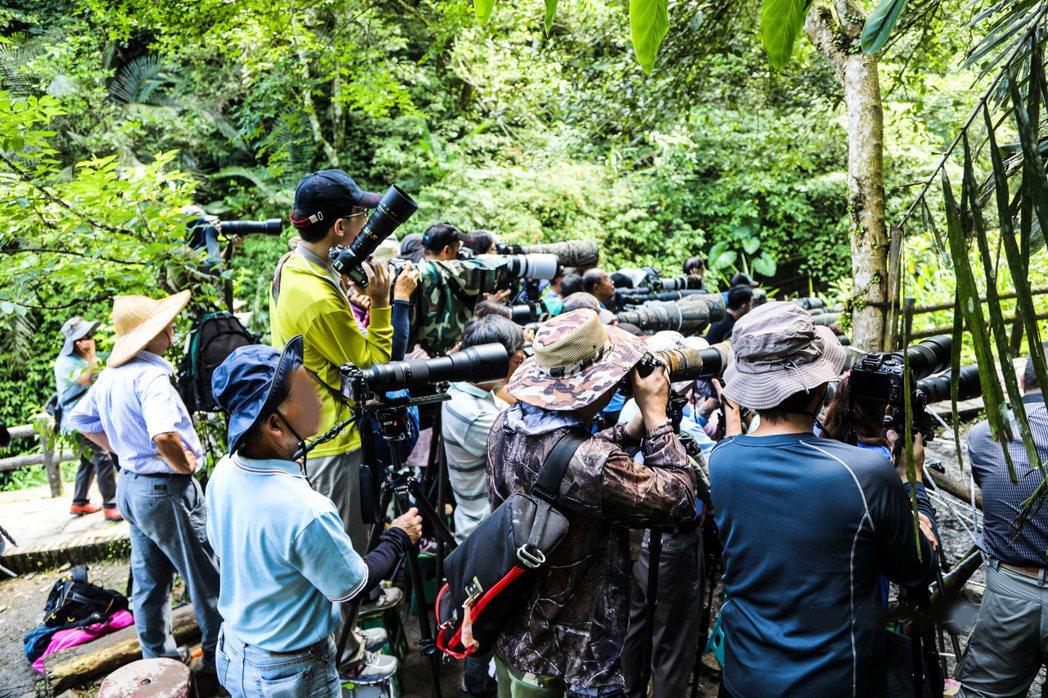 來自中南部甚至國外的愛鳥人士拿著大砲,瘋拍宜蘭現蹤的八色鳥。 圖/呂學麟提供