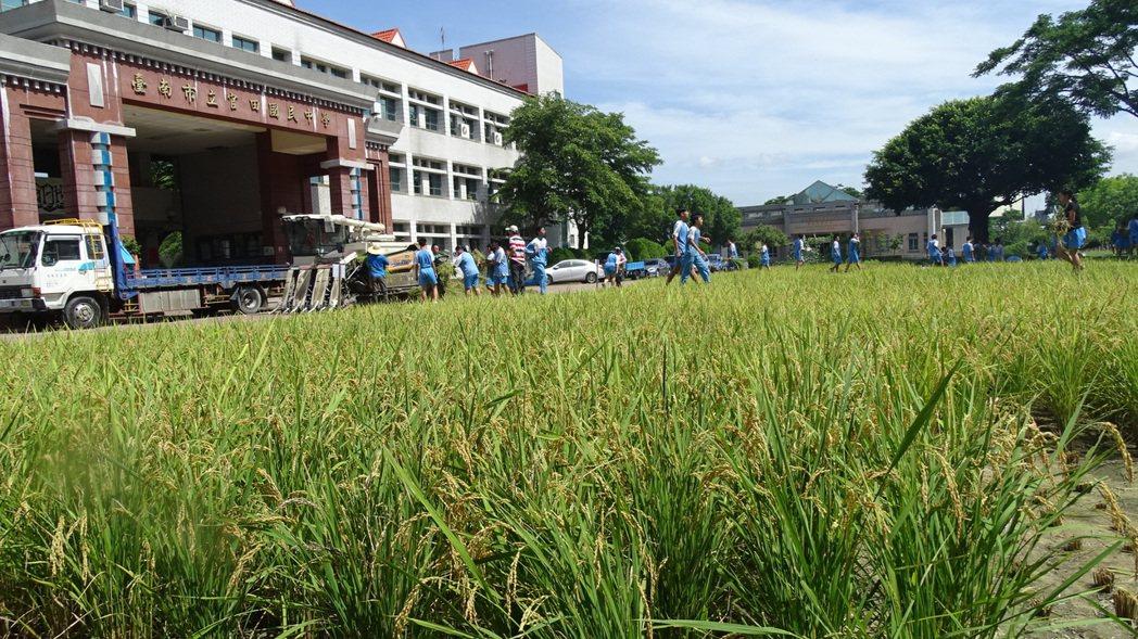 台南官田國中安排畢業生割稻,在田中央拿畢業證書。記者謝進盛/攝影