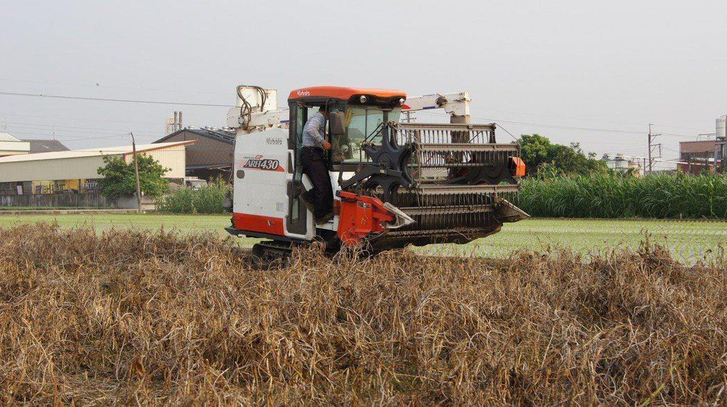 紅豆故鄉萬丹生產的紅豆去年採收情形。記者陳崑福/翻攝