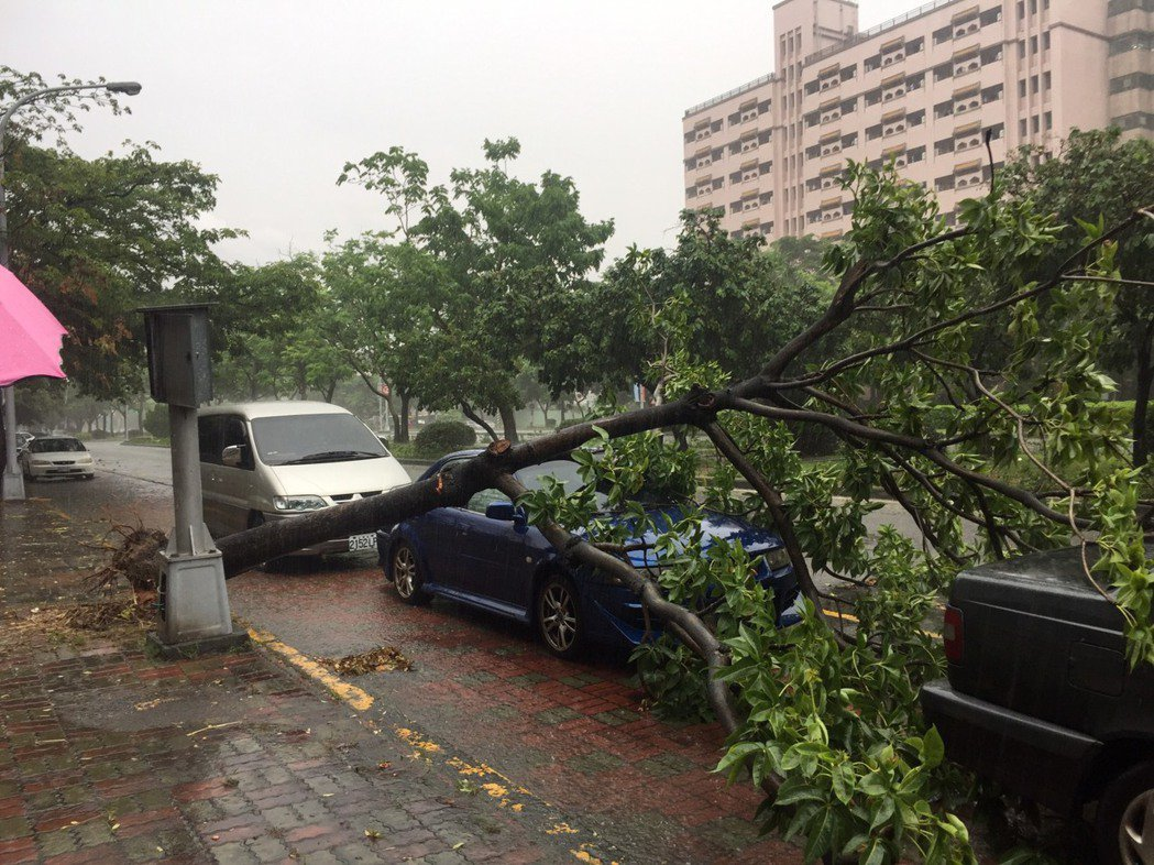 台中市南區興大路今天樹倒壓住多輛轎車。圖/民眾陳雅惠提供