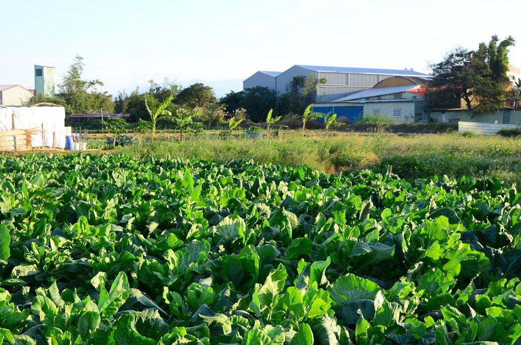 許多農田冒出一間間非法工廠,政府擬輔導合法化,但業者須付生態補償金。 本報資料照片