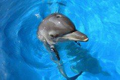黃宗慧/看海豚表演可以讓人們對動物負責嗎?——談親生命性的意義與侷限