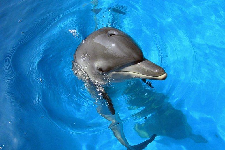 觀看海豚表演是因為人類天生就具有「親生命性」,那為何還有這麼多的物種持續消失中?...