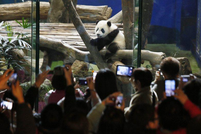 許多人或許真的是基於想親近自然的需求而去參觀動物園,問題是多半的動物園完全沒有達...