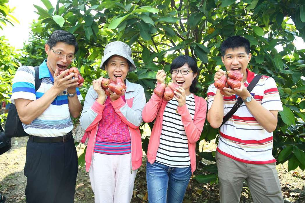 高雄一日農夫針對港澳地區遊客設計農業體驗遊程,到六龜品嘗蓮霧。記者謝梅芬/翻攝