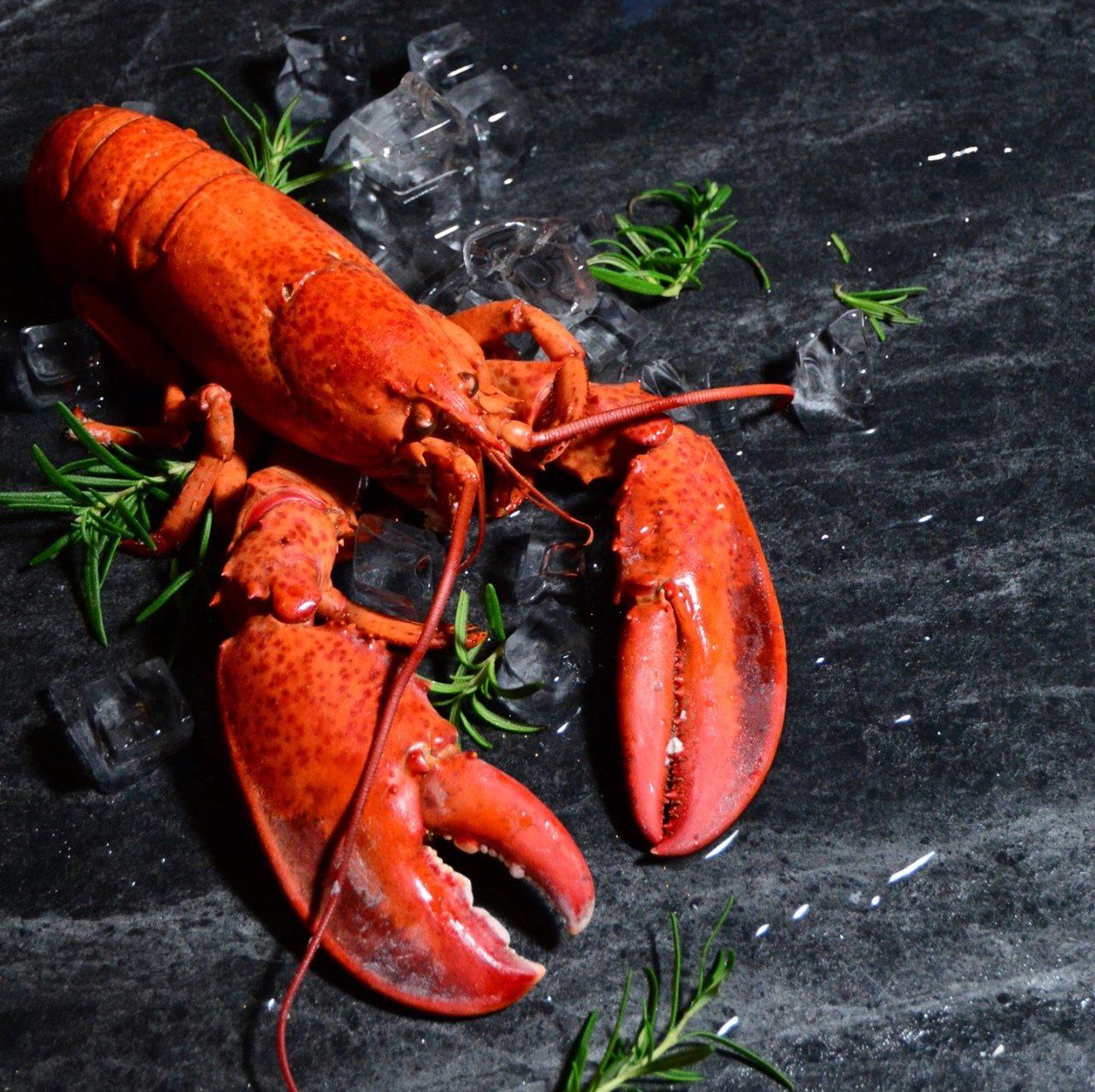 台北君品雲軒西餐廳推出用餐送加拿大龍蝦2隻。圖/台北君品酒店提供