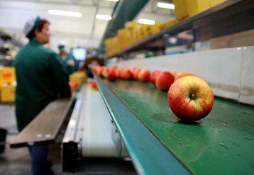 蘋果都到哪去了?因標準化制度而消失的德國蘋果