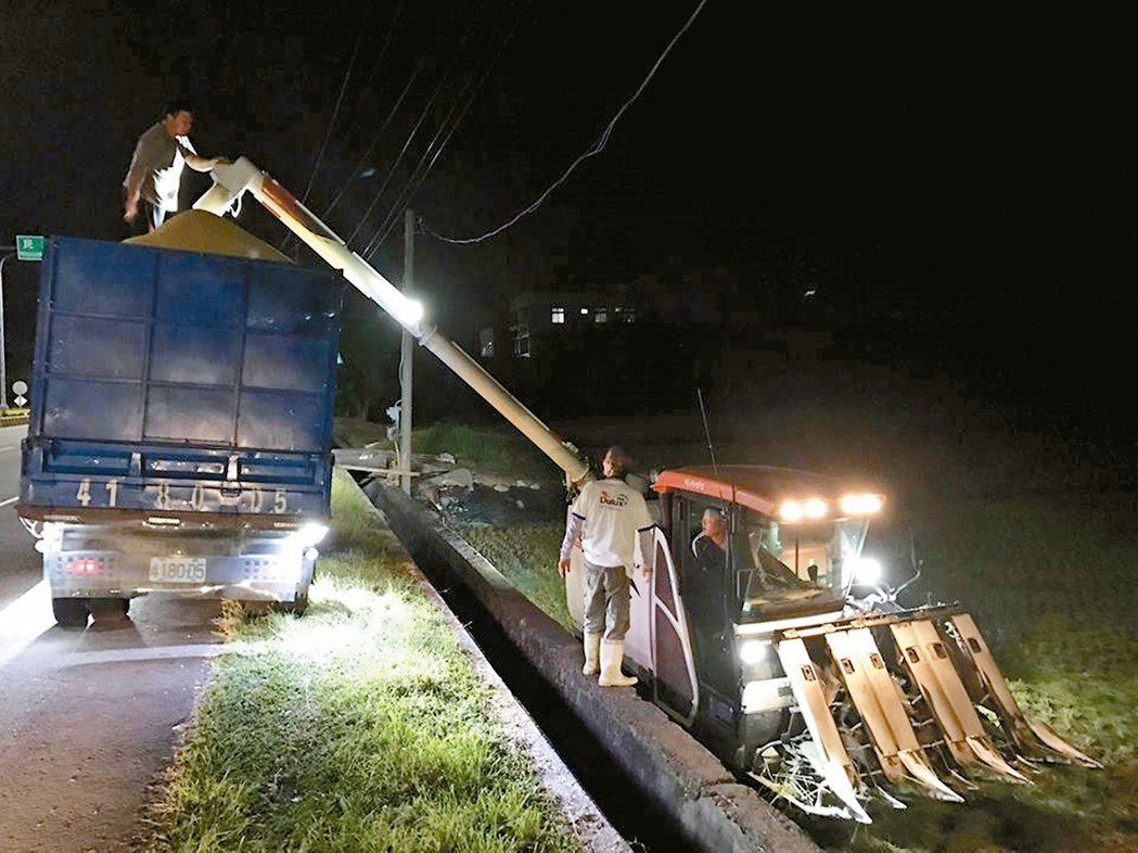 農民日夜不停搶收水稻,割稻機到處借調。 記者魯永明/攝影