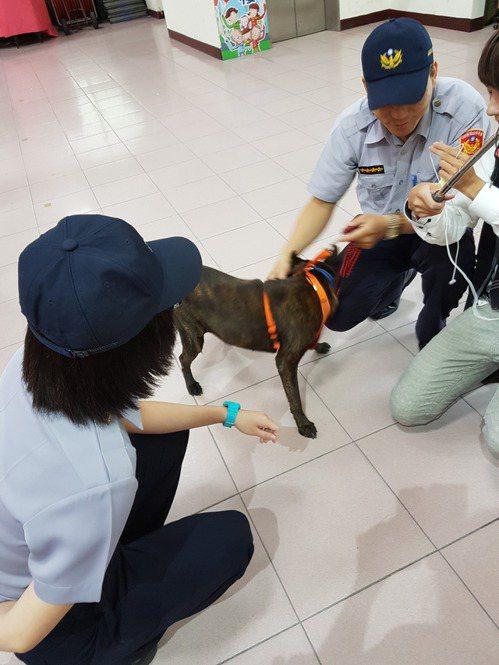 台南市北區公園派出所裡面的波麗士犬受到警員的喜愛。 記者修瑞瑩/攝影