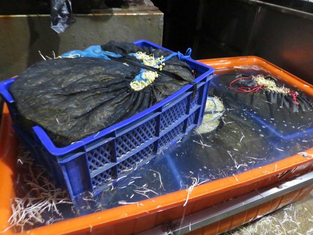 農產公司製造豆芽菜的現場環境髒亂不堪。圖╱新北市衛生局提供