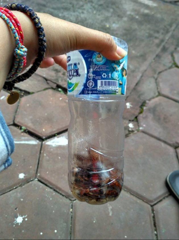 印尼女子蕾思塔麥拉自製捕蟑神器,簡單介紹作法,受到網路熱烈分享該篇PO文。圖...