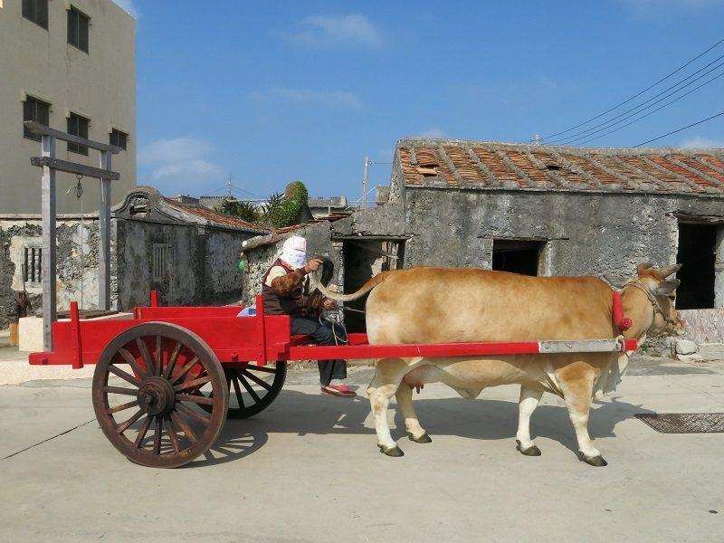 坐牛車遊南寮社區,認識澎湖傳統農村文化