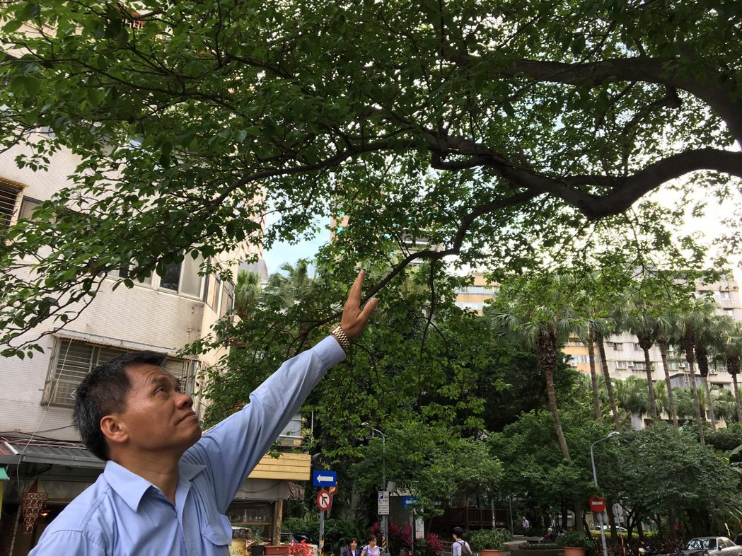 儘管更換工作地點,陳林金還是會常回來關心樹況。 記者高詩琴/攝影