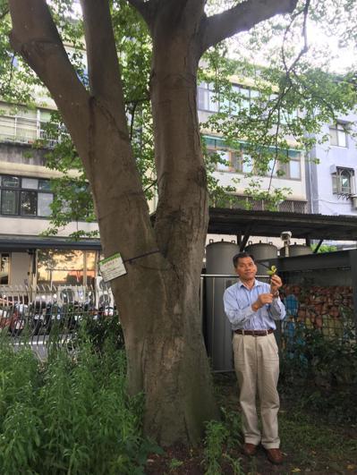 陳林金說,當時僅是一隻長約20公分的枝條,如今成為大樹。 記者高詩琴/攝影