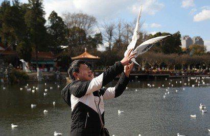 大陸民眾竟抓海鷗來拍照。圖/央視新聞