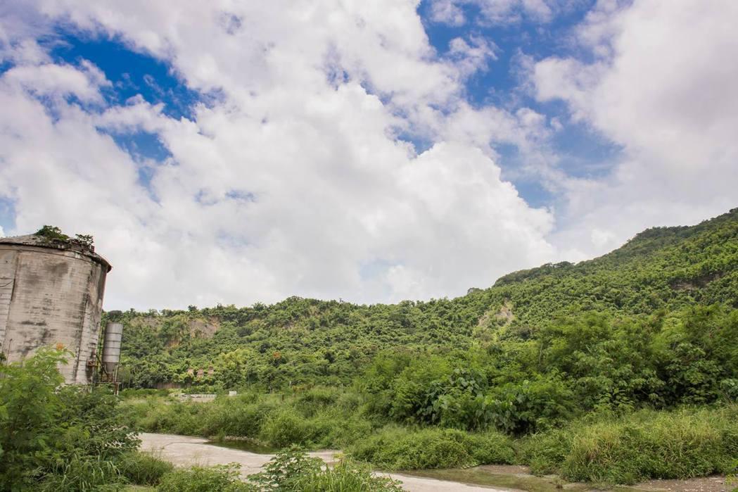 壽山北部的台泥礦區的植生復原進行超過20年但仍充滿入侵物種。 攝影/廖士睿