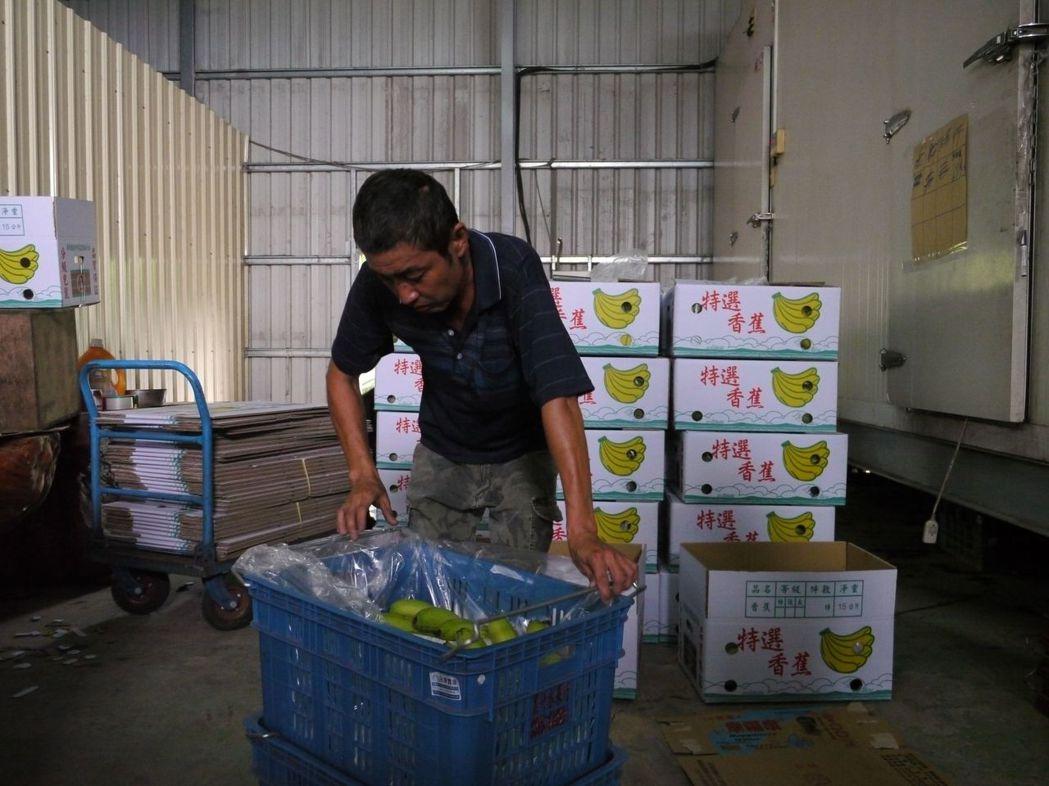 「好人會館」號召民眾團購香蕉,今天起從旗山產地購買250箱熟蕉送達消費者手中。記...