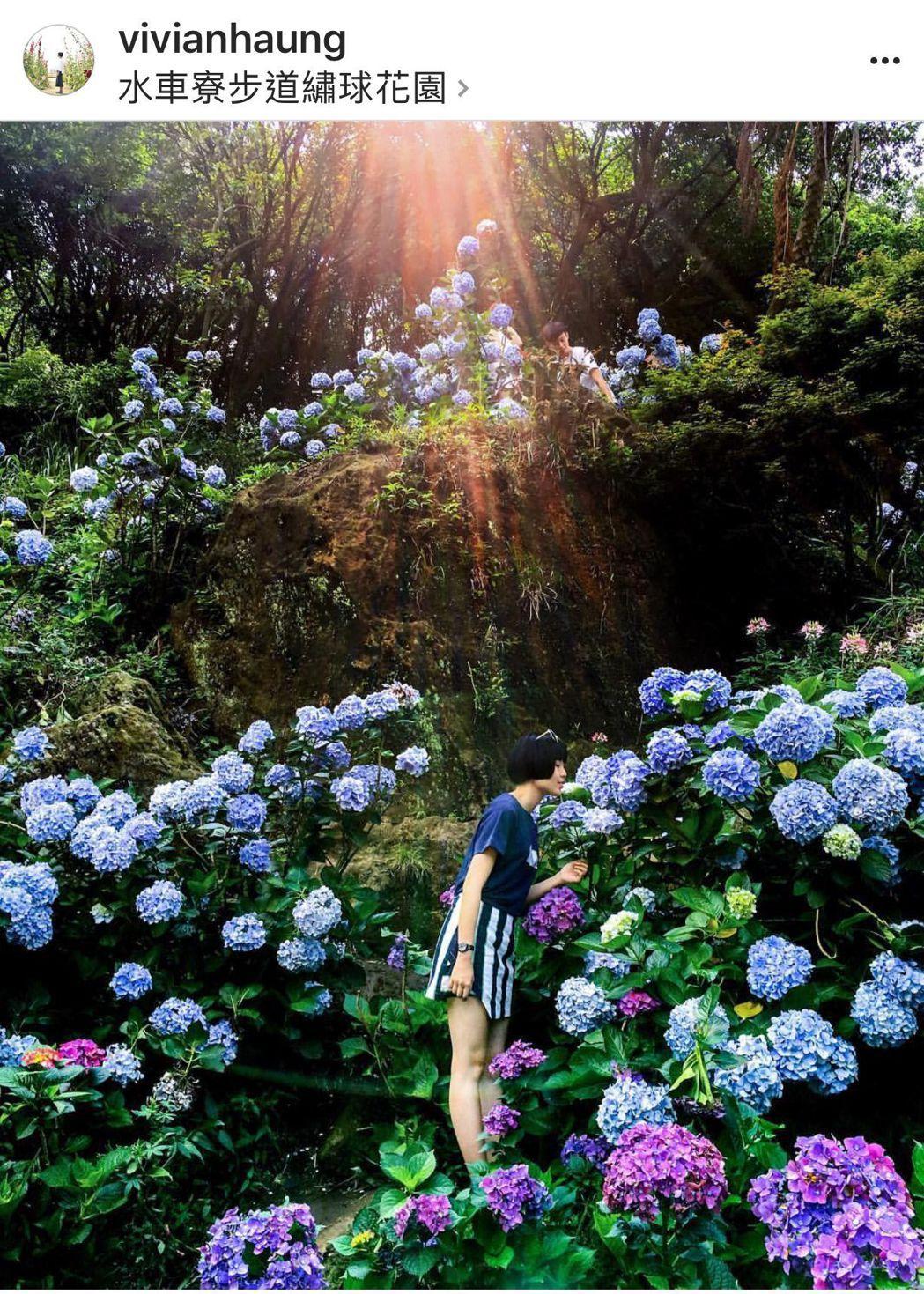 台南攝影玩家vivianhaung(香菇)在陽明山拍下水車寮步道繡球花園美照,登...
