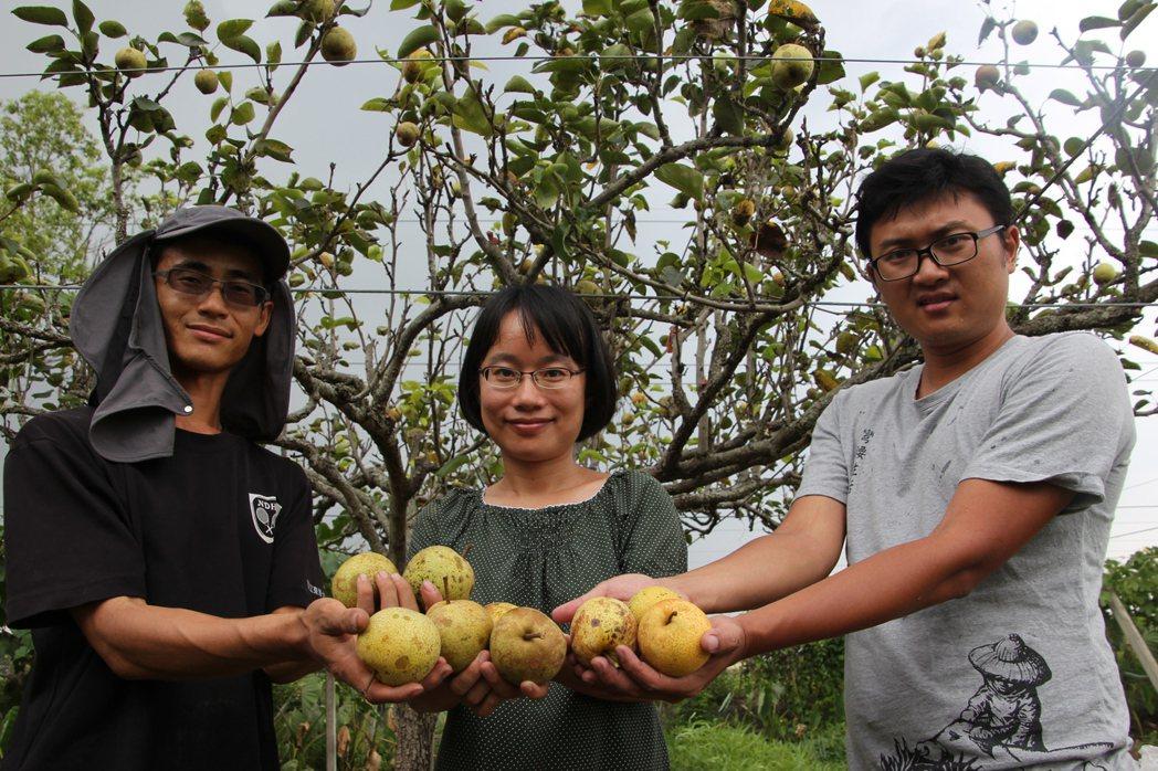 北農總經理吳音寧(中)曾因捨不得老農要砍掉梨樹,而向老農承租土地,和幾位青農種起...