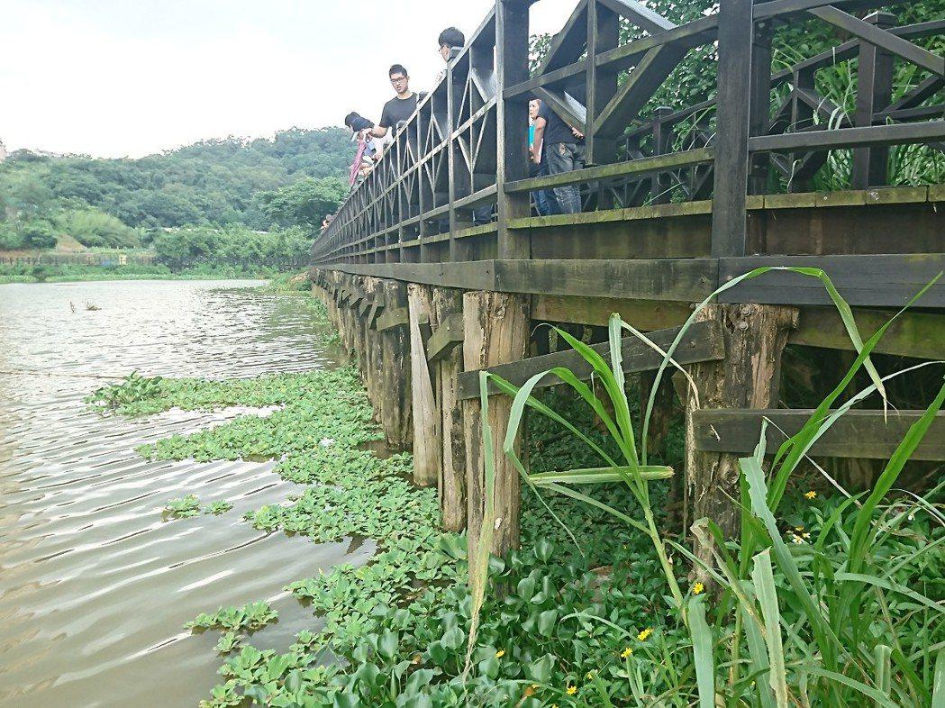 汐止區金龍湖環湖步道木棧橋的木頭基座長期泡在水裡,都已經腐蝕,市議員白珮茹要求全...