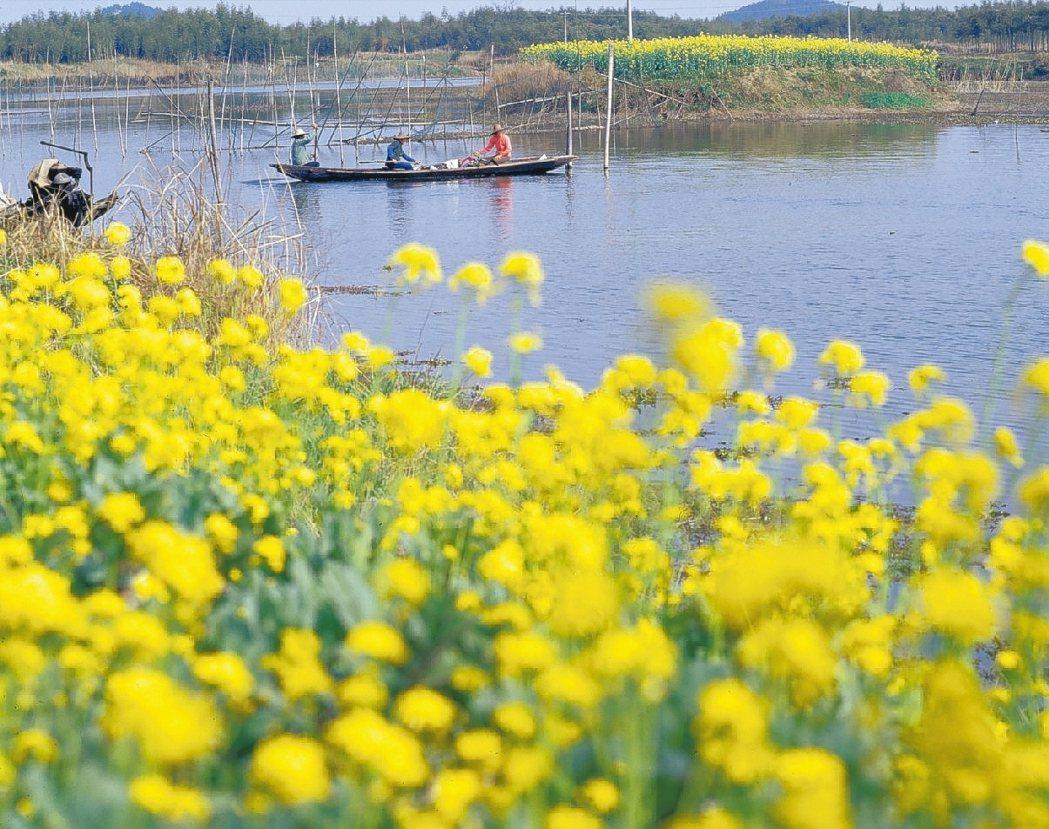 中國最美濕地 下渚湖春擁百花 圖/本報浙江溫州傳真