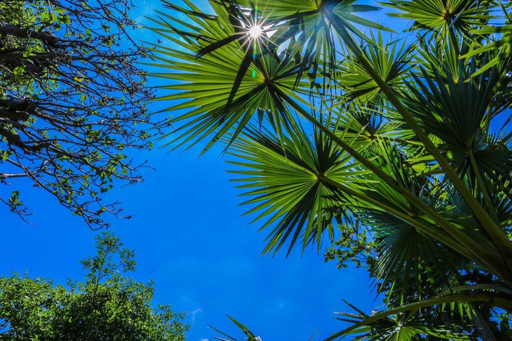6000坪的棕櫚公園,樹海茂密, 攝影/張世雅