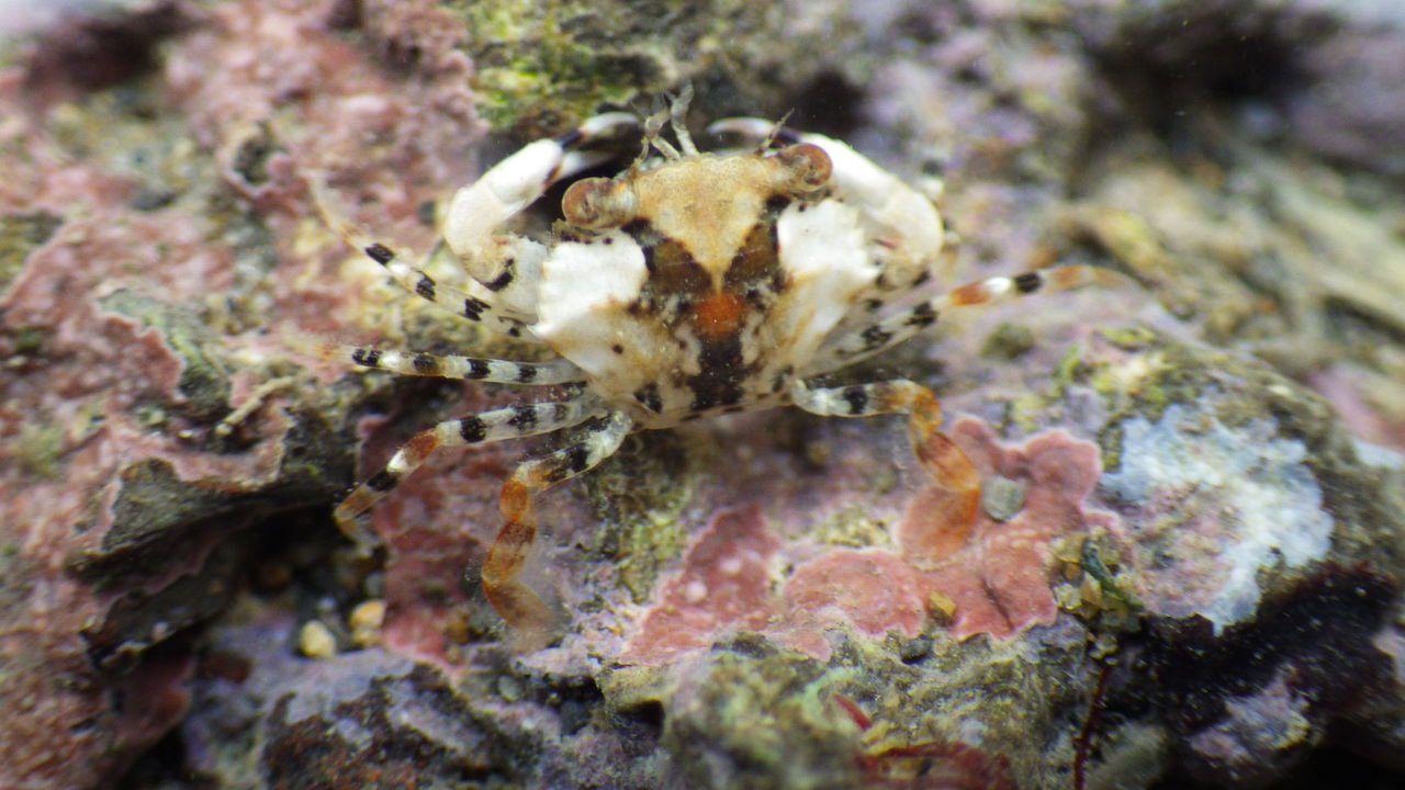 當地的梭子蟹。圖/劉靜榆提供