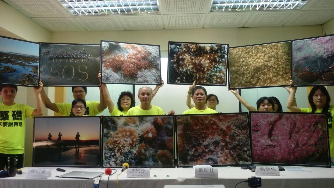 環團與從事生物礁研究的學者專家在大潭藻礁地區發現第一級保育類「柴山多杯孔珊瑚」,...