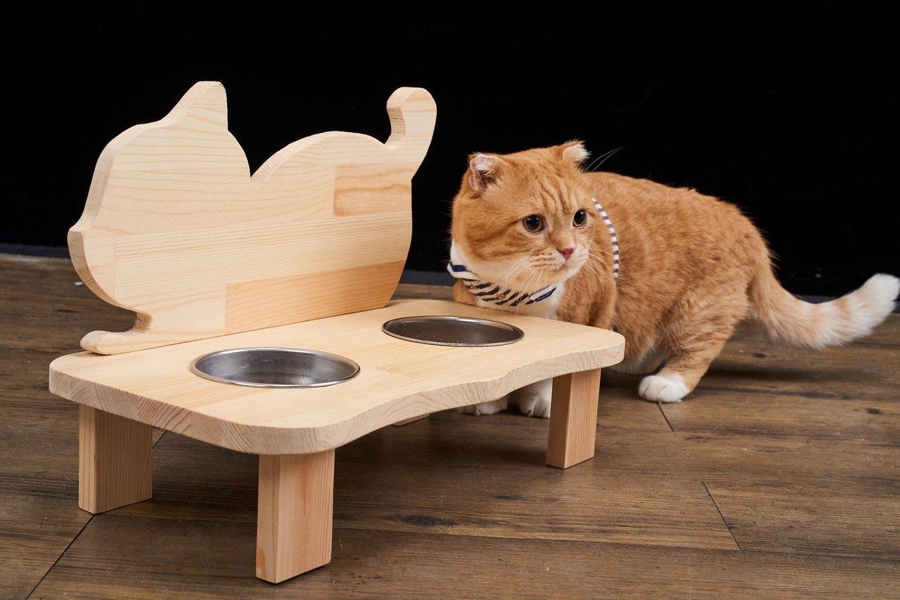 手作寵物餐桌課詢問度高。圖/特力屋提供