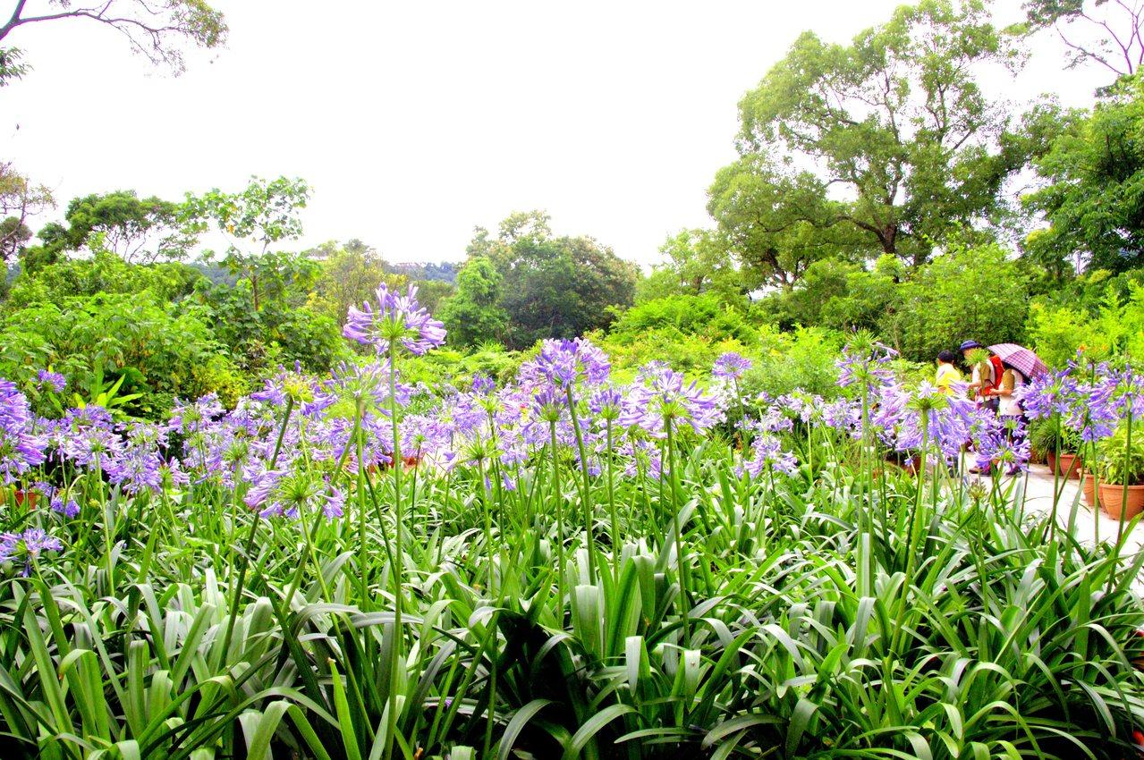 內雙溪自然中心的愛情花海,預計這2周進入盛開期。圖/摘自台北市大地工程處官網