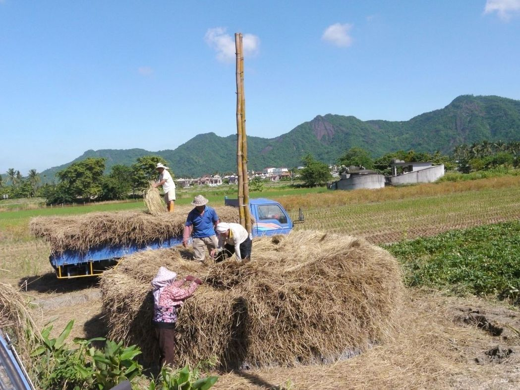 一群美濃農民在農地上「堆稈棚」,頂著大熱天工作絲毫不輕鬆。記者徐白櫻/攝影