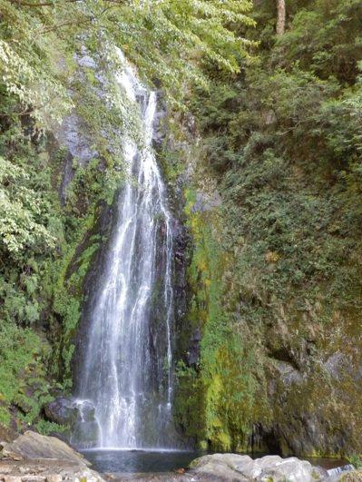 位於武陵風景區的桃山瀑布,瀑布下的水潭可清晰看見國寶魚「櫻花鉤吻鮭」。 圖/東勢...