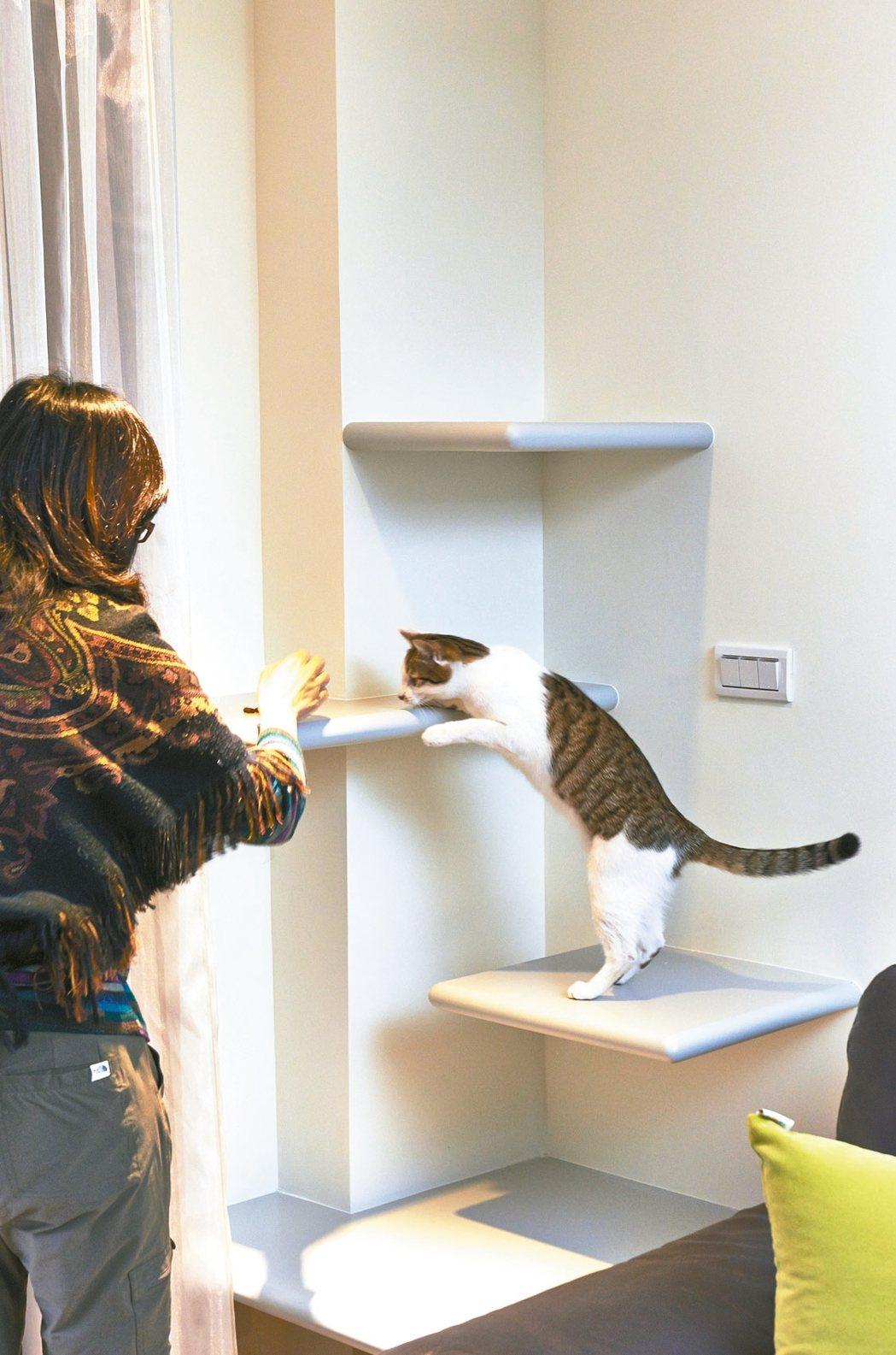 書櫃結合跳台、貓抓柱或貓屋,讓貓咪在家穿梭遊戲。 信義居家/提供