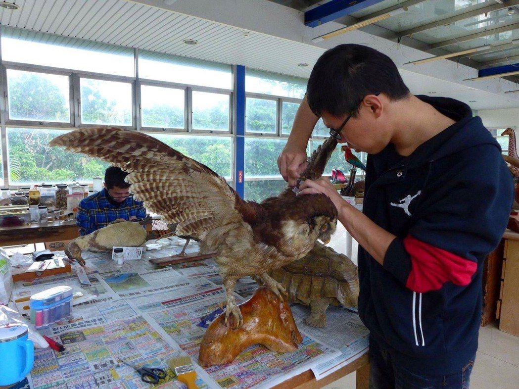 清大學生修復標本的過程。記者郭宣彣/翻攝