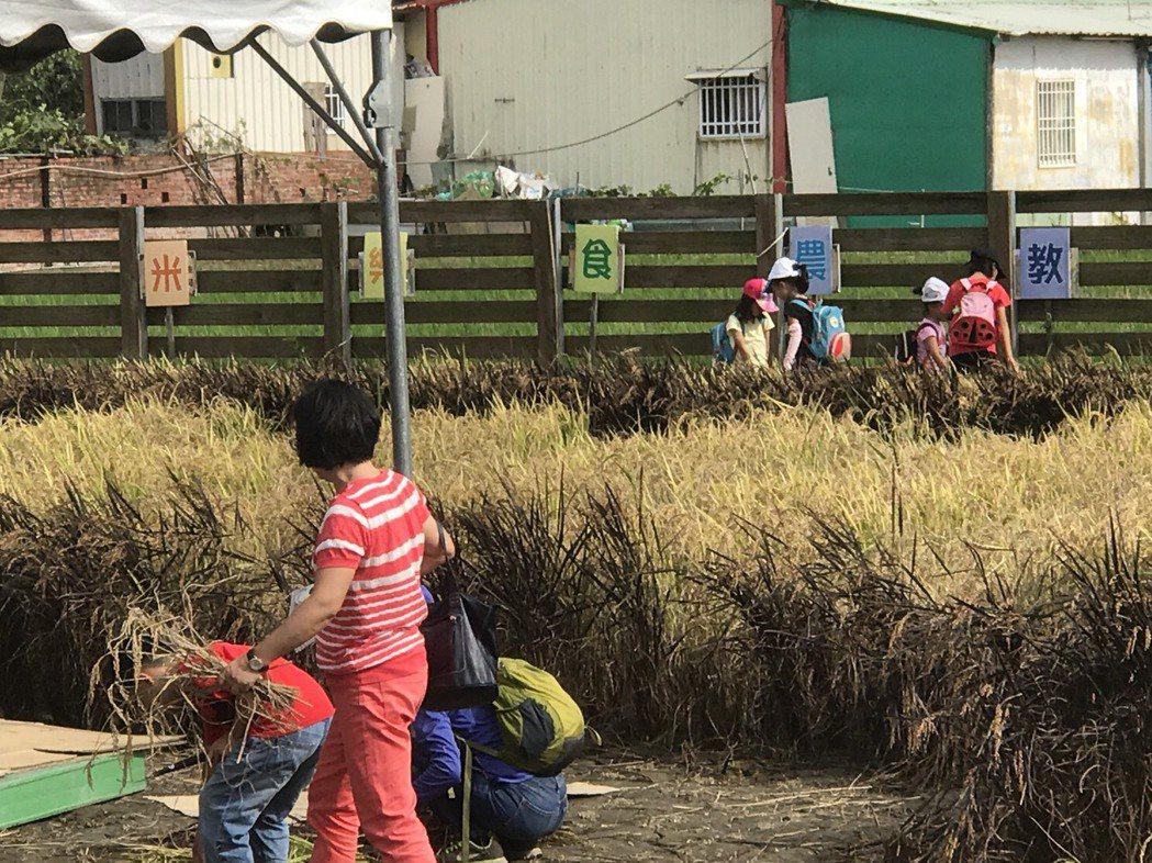 台南首場大型米食料理比賽下午在後壁舉辦,民眾不僅能品嘗各類米食,也能下田體驗割稻...