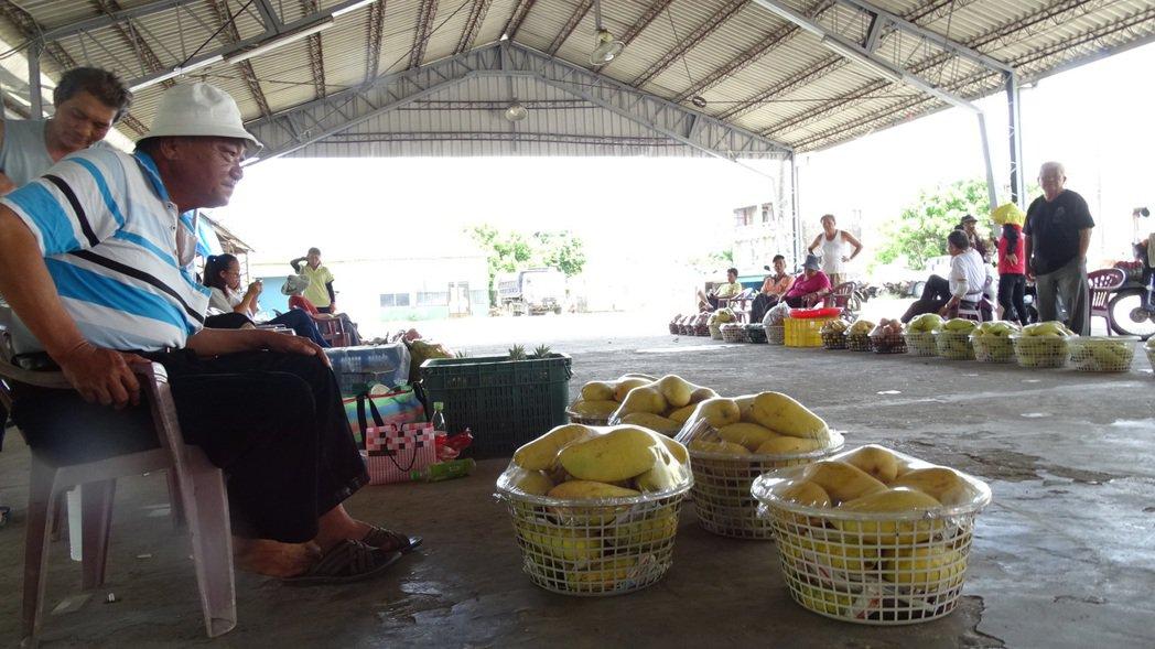 長期被「路過」,台南大內青果市場芒果物美價廉,果農苦候消費者上門。記者謝進盛/攝...