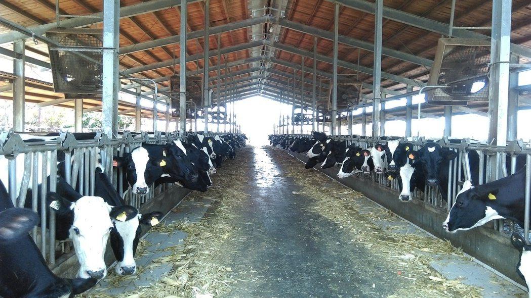 高雄市梓官區畜牧場利用大型風扇降低畜禽舍溫度。圖/高雄市農業局提供