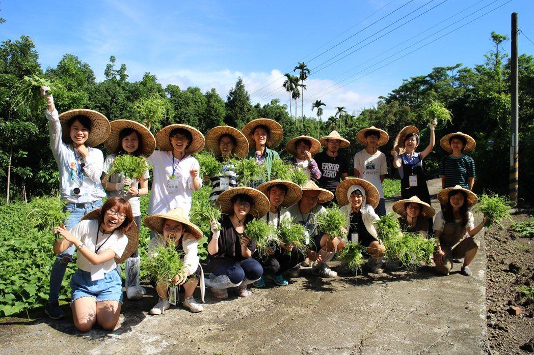 這群年輕人晚上住農家體驗鄉居生活,白天還要下田幫忙採龍鬚菜。記者徐白櫻/翻攝