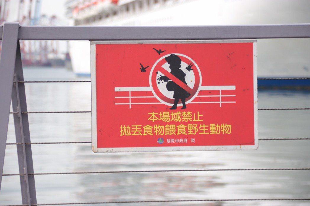 基隆市海洋廣場上有清楚告示牌,但遏止不了拋食誘拍老鷹的歪風,民眾認為市府無法有效...