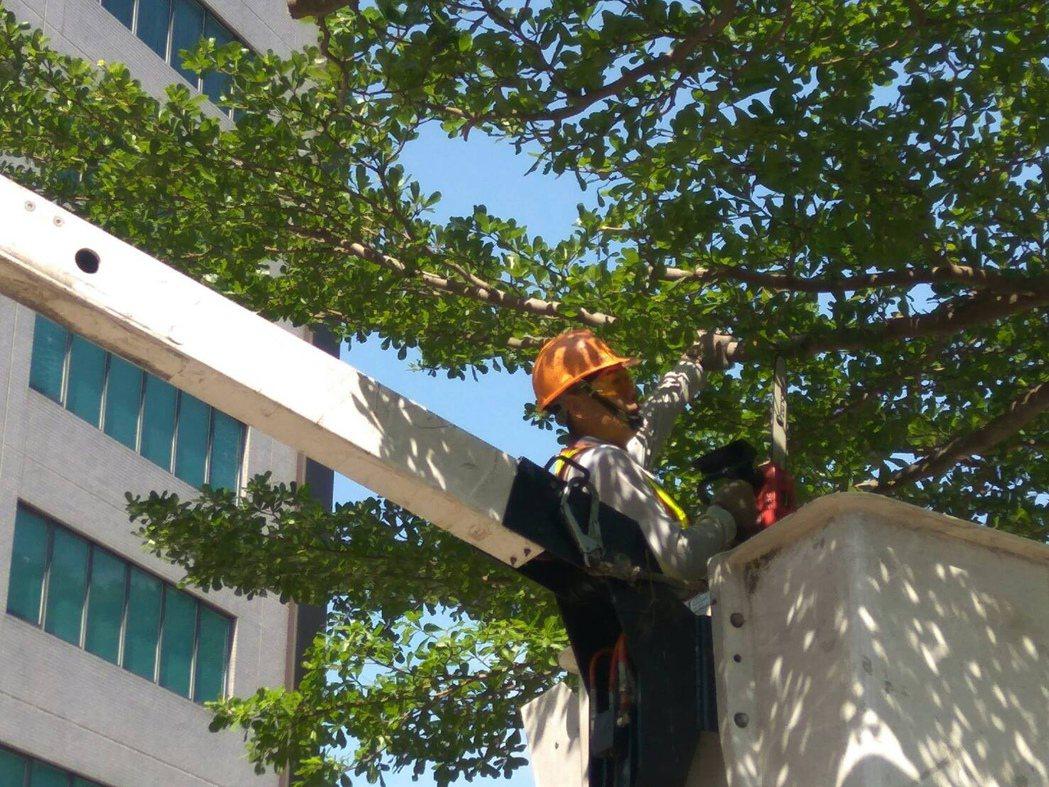 2017世界大學運動會將至,為了整理台北市行道樹,工務局公園處派出一群「剪刀手」...