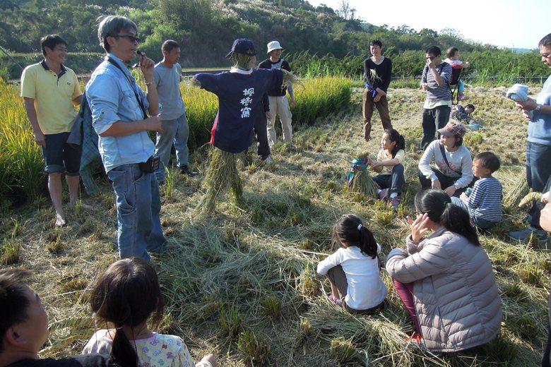 苗栗縣通霄鎮楓樹里的「石虎米」收割,吸引各地近百民眾和親子參加體驗活動。 圖/本報系資料照
