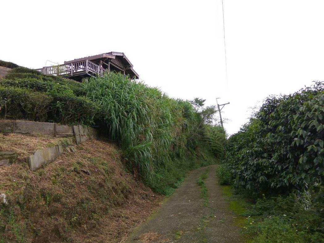 夏季熱浪來襲,全台灣熱島效應,雲林避暑秘境二尖山山頂涼亭吸引民眾上山乘涼,登山的...